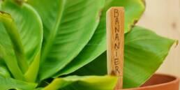 10 façons de réutiliser sa brosse à dents en bambou après usage