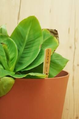 Porte nom pour plante